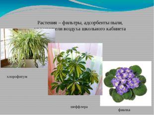 Растения – фильтры, адсорбенты пыли, увлажнители воздуха школьного кабинета х