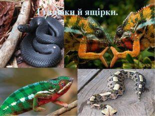 І гадюки й ящірки.