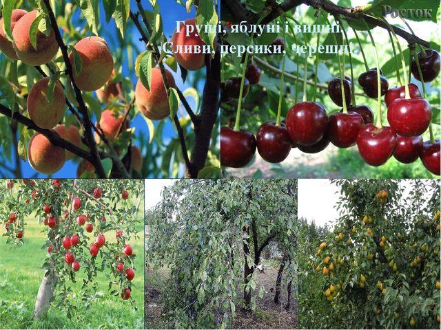 Груші, яблуні і вишні. Сливи, персики, черешні.