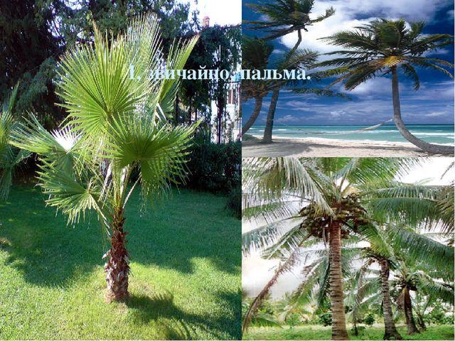 І, звичайно, пальма.
