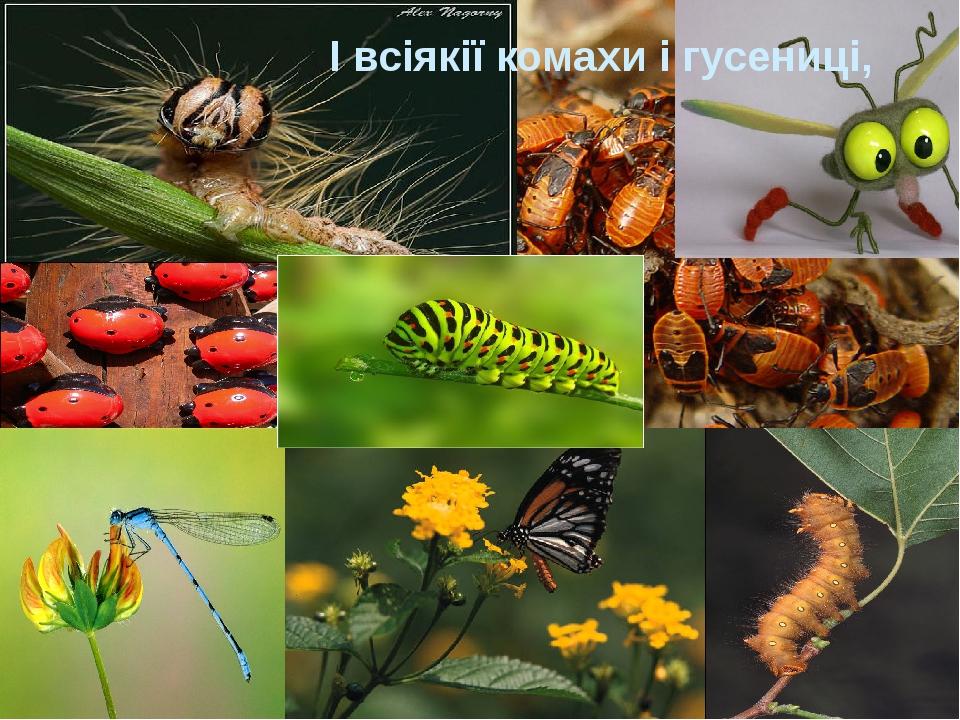 І всіякії комахи і гусениці,