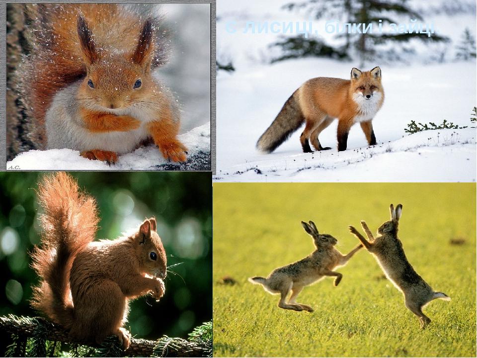 Є лисиці, білки і зайці.