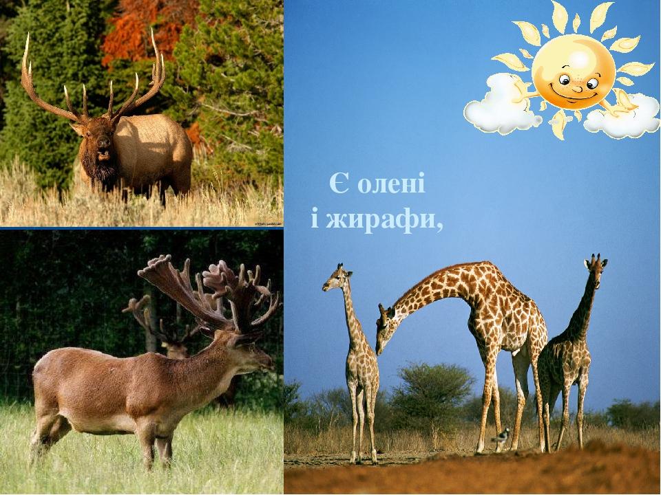 Є олені і жирафи,