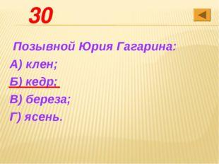 30 Позывной Юрия Гагарина: А) клен; Б) кедр; В) береза; Г) ясень.
