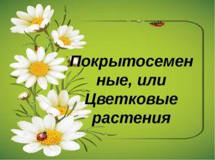 Покрытосеменные, или Цветковые растения