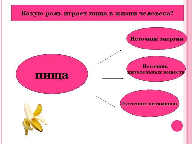 пища Источник энергии Источник питательных веществ Источник витаминов Какую р...