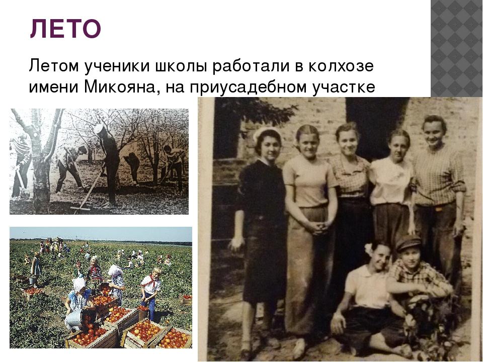 ЛЕТО Летом ученики школы работали в колхозе имени Микояна, на приусадебном уч...