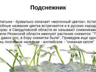 Подснежник По латыни - буквально означает «молочный цветок». Кстати, подобные