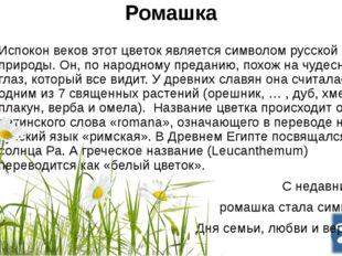 Ромашка Испокон веков этот цветок является символом русской природы.Он, по н
