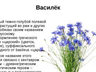 Василёк Скромный темно-голубой полевой цветок, растущий во ржи и других злака