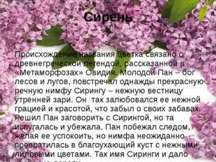 Сирень Происхождение названия цветка связано с древнегреческой легендой, расс