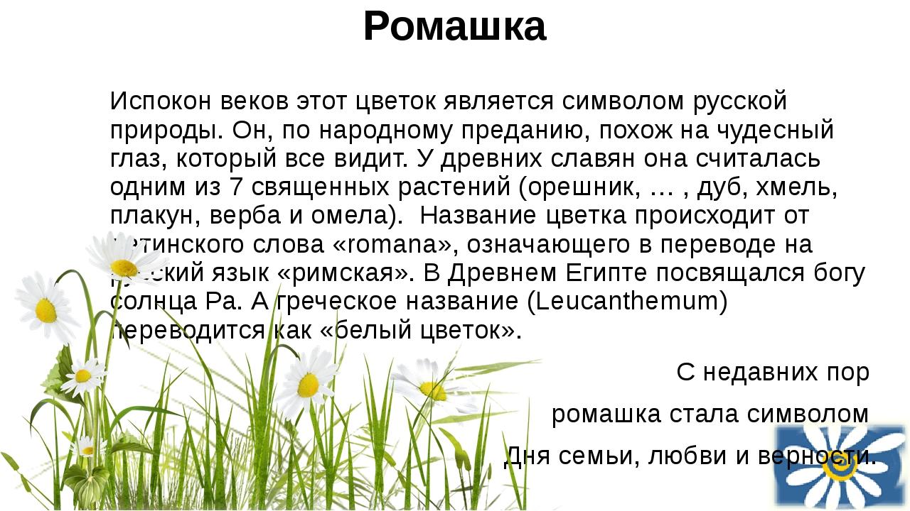 Ромашка Испокон веков этот цветок является символом русской природы.Он, по н...