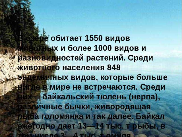 В озере обитает 1550 видов животных и более 1000 видов и разновидностей раст...