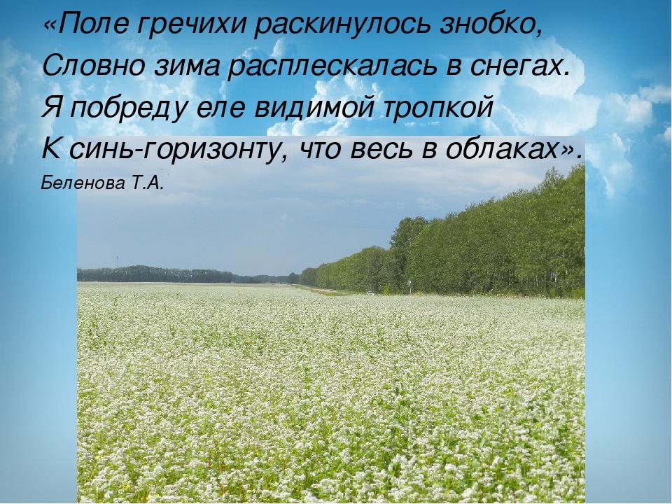 «Поле гречихи раскинулось знобко, Словно зима расплескалась в снегах. Я побре...