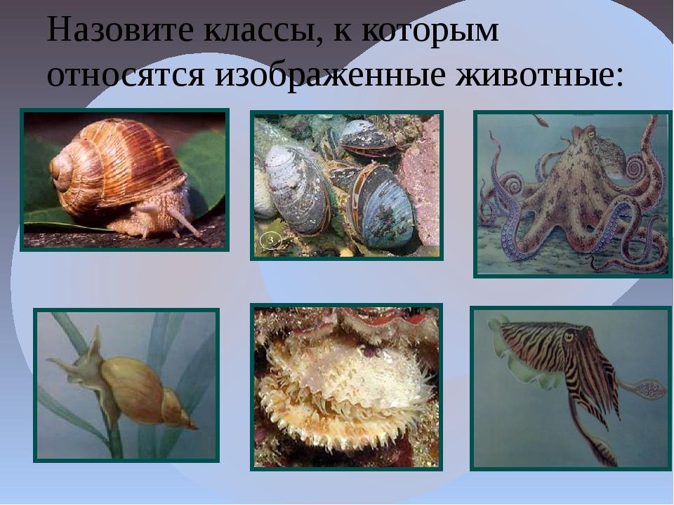 Назовите классы, к которым относятся изображенные животные: