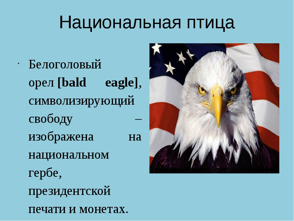 Национальная птица Белоголовый орел[bald eagle], символизирующий свободу – и...