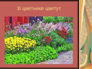 В цветнике цветут