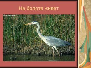 На болоте живет