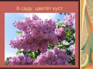 В саду цветёт куст