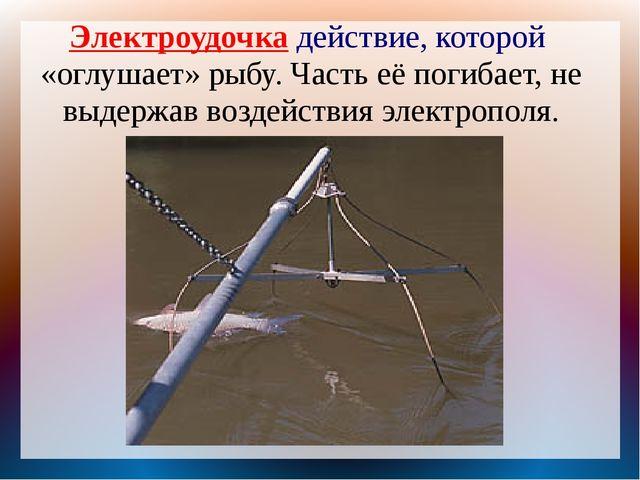 Электроудочка действие, которой «оглушает» рыбу. Часть её погибает, не выдерж...