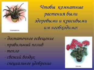 Чтобы комнатные растения были здоровыми и красивыми им необходимо: - достато