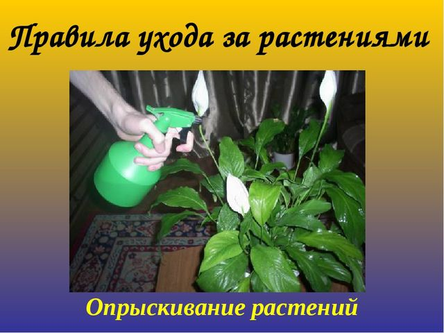 Опрыскивание растений Правила ухода за растениями