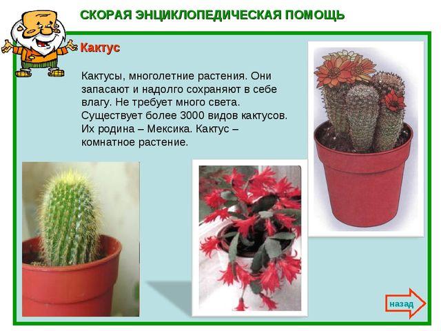 СКОРАЯ ЭНЦИКЛОПЕДИЧЕСКАЯ ПОМОЩЬ Кактус назад Кактусы, многолетние растения....