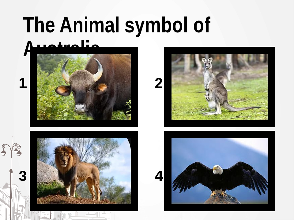 The Animal symbol of Australia 1 2 3 4