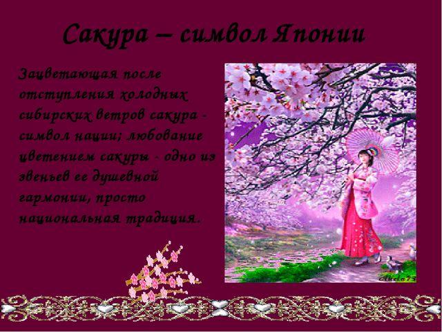 Сакура – символ Японии Зацветающая после отступления холодных сибирских ветро...