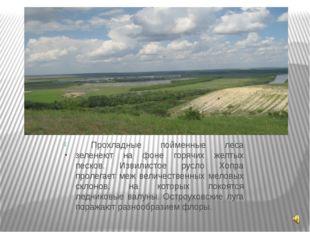 . Прохладные пойменные леса зеленеют на фоне горячих желтых песков. Извилист