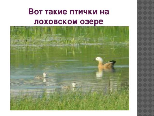 Вот такие птички на лоховском озере