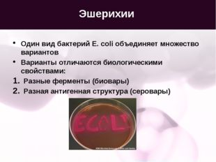 Эшерихии Один вид бактерий E. coli объединяет множество вариантов Варианты от