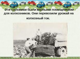 Эти грузовики были верными помощниками для колхозников. Они перевозили урожа