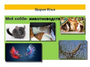 Цыран Илья Моё хобби- животноводства!