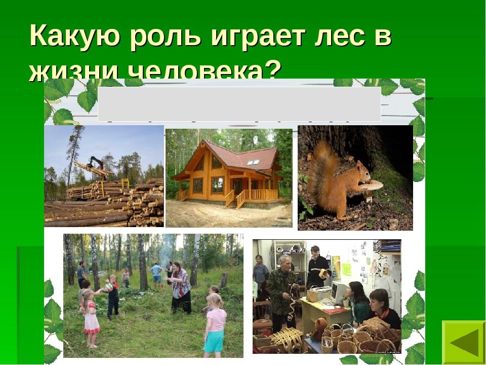 Какую роль играет лес в жизни человека?
