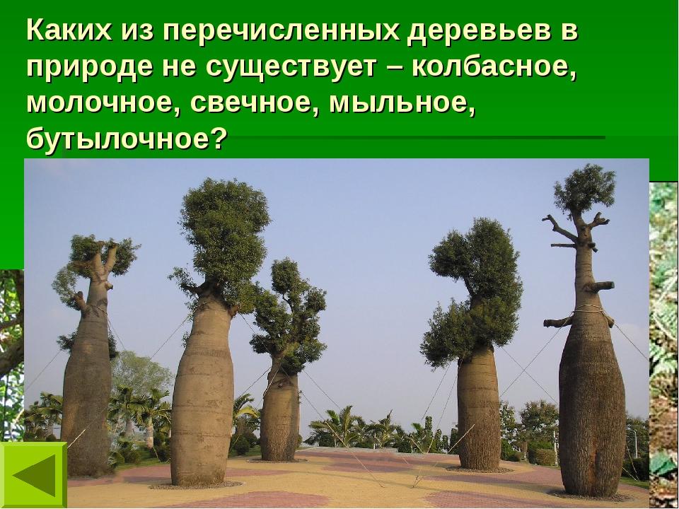 Каких из перечисленных деревьев в природе не существует – колбасное, молочное...
