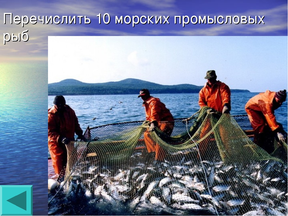 Перечислить 10 морских промысловых рыб