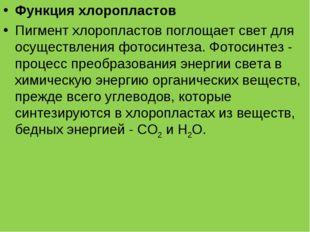 Функция хлоропластов Пигмент хлоропластов поглощает свет для осуществления фо