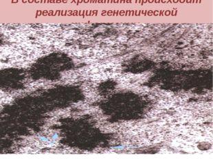 В составе хроматина происходит реализация генетической информации.