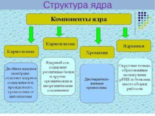 Структура ядра