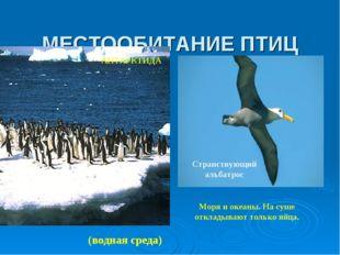 МЕСТООБИТАНИЕ ПТИЦ Моря и океаны. На суше откладывают только яйца. Странствую