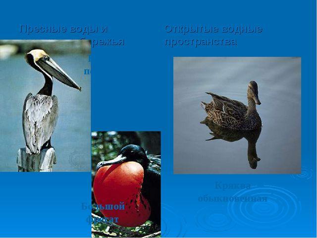 Пресные воды и морские побережья Открытые водные пространства Бурый пеликан Б...