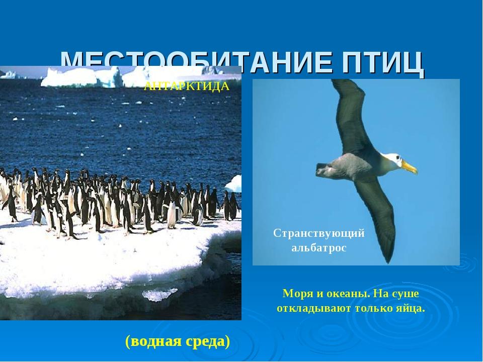 МЕСТООБИТАНИЕ ПТИЦ Моря и океаны. На суше откладывают только яйца. Странствую...