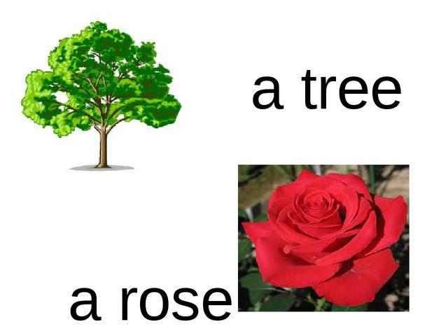 a tree a rose