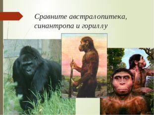 Сравните австралопитека, синантропа и гориллу