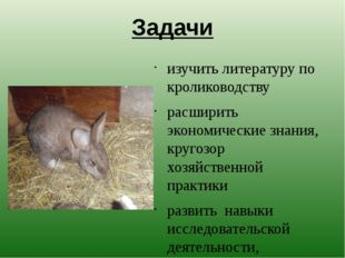Задачи изучить литературу по кролиководству расширить экономические знания, к