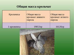 Общая масса крольчат Крольчиха Общая масса крольчат зимнего окрола Общая мас