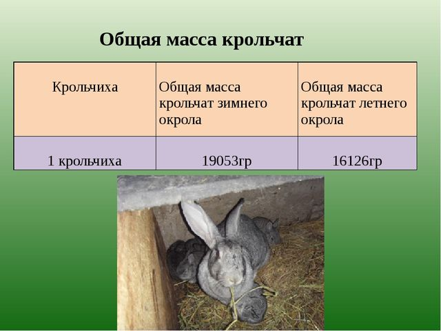 Общая масса крольчат Крольчиха Общая масса крольчат зимнего окрола Общая мас...
