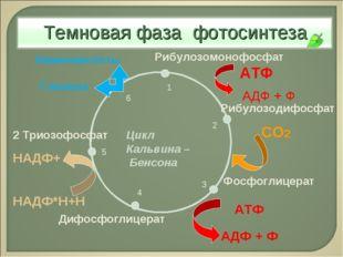 Рибулозодифосфат Фосфоглицерат Дифосфоглицерат 2 Триозофосфат Глюкоза Рибулоз