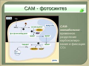 САМ-метаболизм: временное разделение карбоксилиро-вания и фиксации СО2